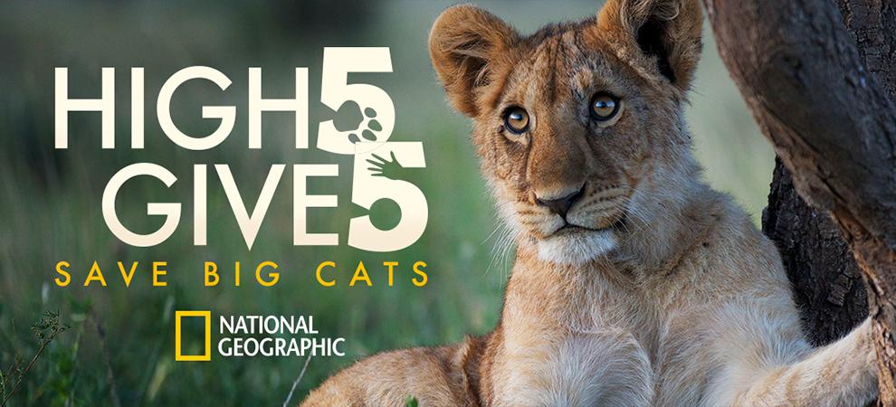 91250 990x450 cb1437688172 Día Mundial del León y #5forBigcats