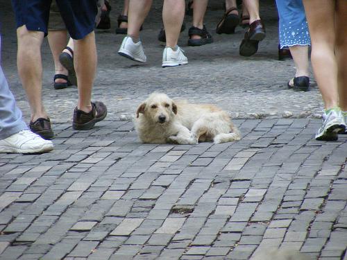 animal1 No al abandono de gatos y perros en verano