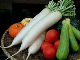 p328 Diferencias entre los alimentos probióticos y los alimentos prébióticos.