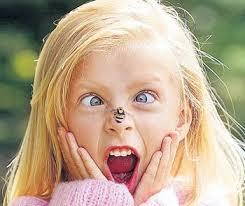 picada1 Reacciones alérgicas por picaduras de insectos en niños