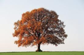Busca Tu árbol Según La Tradición Celta Y Su Significado