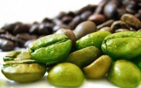 cafe verde 4