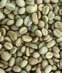 cafe verde2