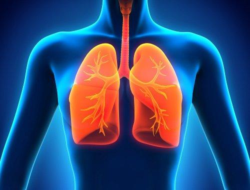 pulmones 3